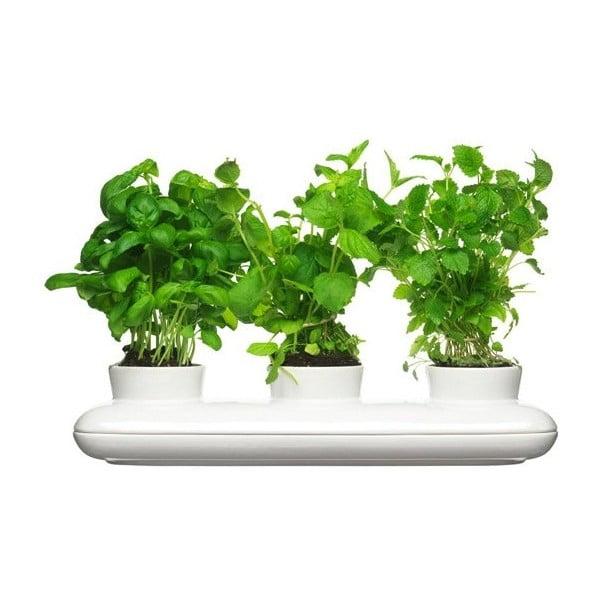 Trio Herb porcelán virágtartó fűszernövényekhez - Sagaform