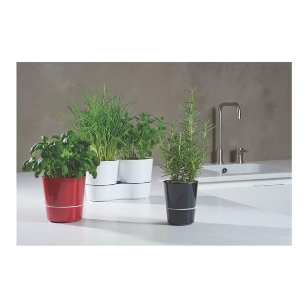 Hydro Herbs fekete, fűszernövénytartó kaspó - Rosti Mepal