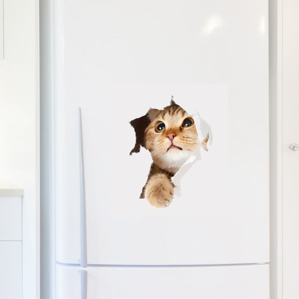 Cat in Hole falmatrica - Ambiance